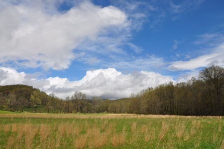 Otter Creek Farm and Forest Tour 011