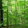 Mullens Forest 010