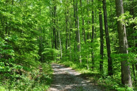 Mullens Forest 011