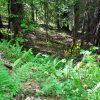 Mullens Forest 013
