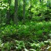 Mullens Forest 014