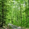 Mullens Forest 015