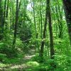 Mullens Forest 018
