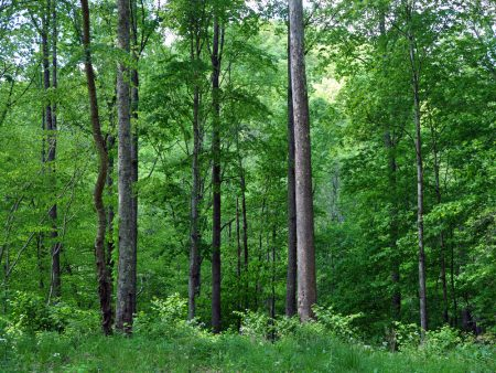 Mullens Forest 024