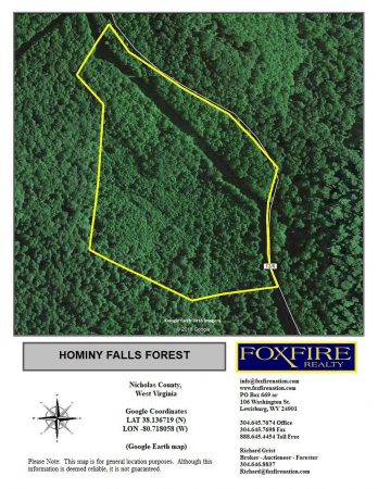 Hominy Falls Forest 002