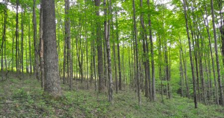 Hominy Falls Forest 006
