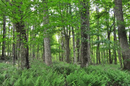 Hominy Falls Forest 014