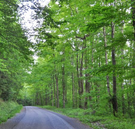 Hominy Falls Forest 015