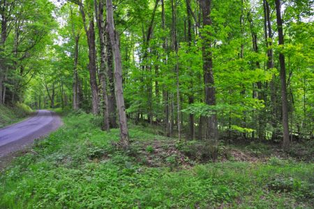 Hominy Falls Forest 021
