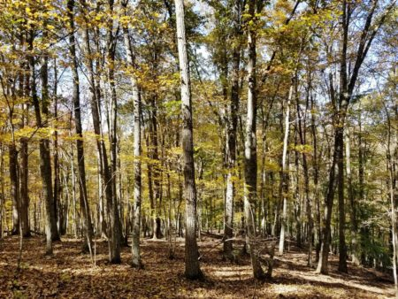 Big Buck Forest and Homeplace 005
