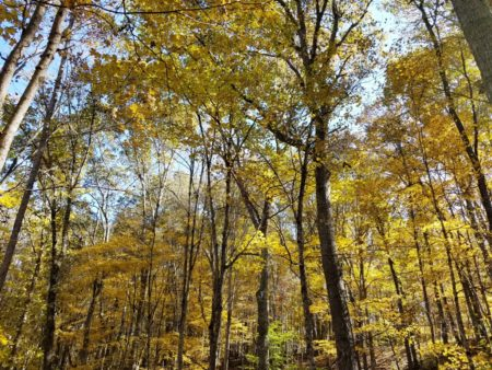 Big Buck Forest and Homeplace 006