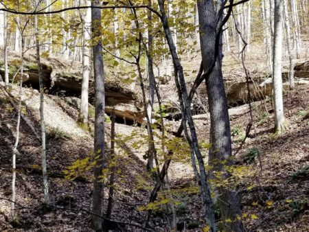 Big Buck Forest and Homeplace 010