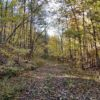 Big Buck Forest and Homeplace 011