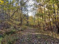 BIG BUCK FOREST AND HOMEPLACE