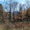 Big Buck Forest and Homeplace 012