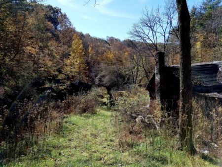 Big Buck Forest and Homeplace 021