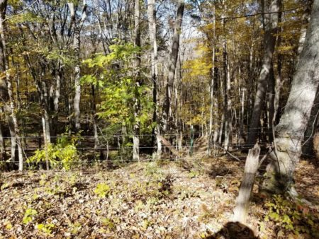 Big Buck Forest and Homeplace 025