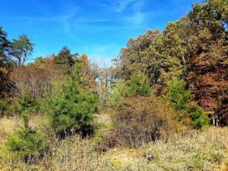 Big Buck Forest and Homeplace 030