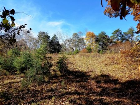 Big Buck Forest and Homeplace 031