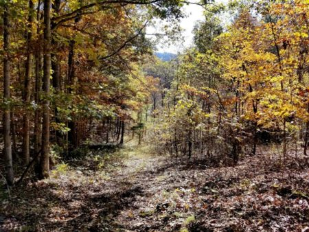 Big Buck Forest and Homeplace 032