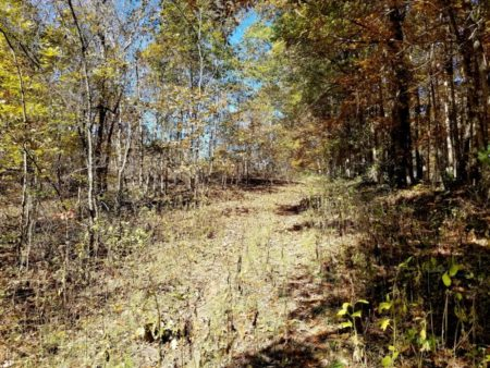 Big Buck Forest and Homeplace 034