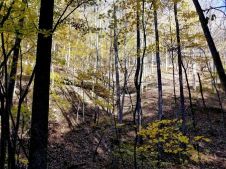 Big Buck Forest and Homeplace 044